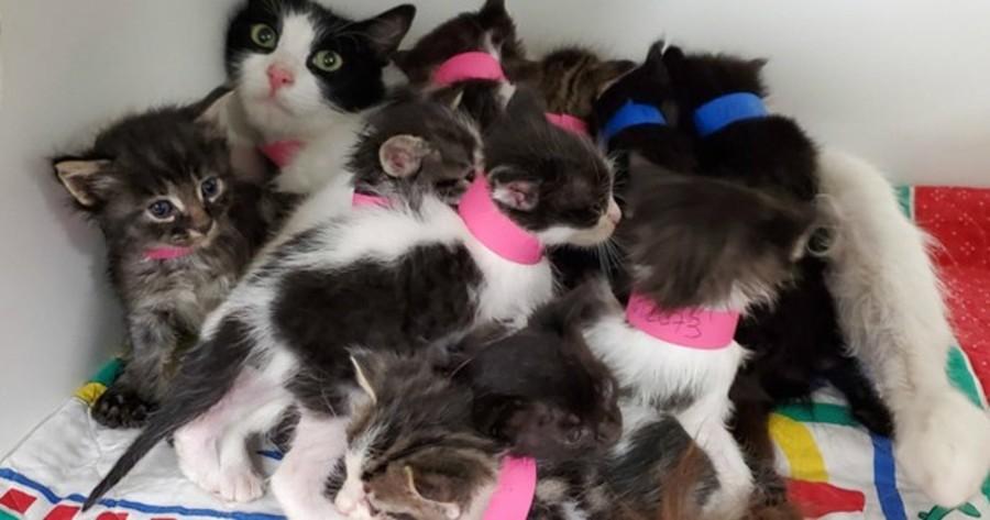 encuentran contenedor basura camada 11 gatos