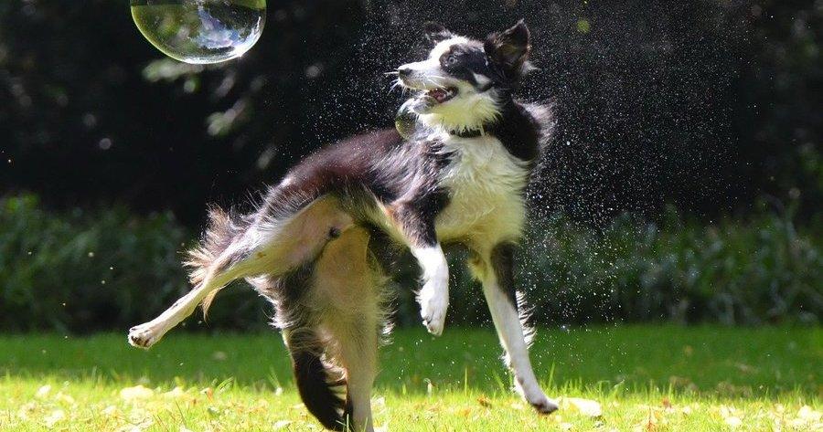 Cane-gioca-con-bolla-di-sapone