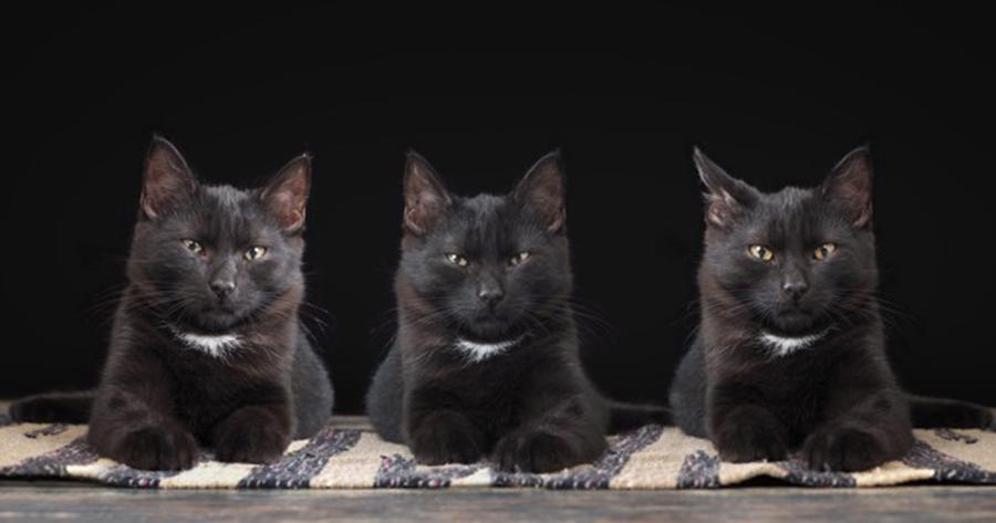 clonacion de mascotas