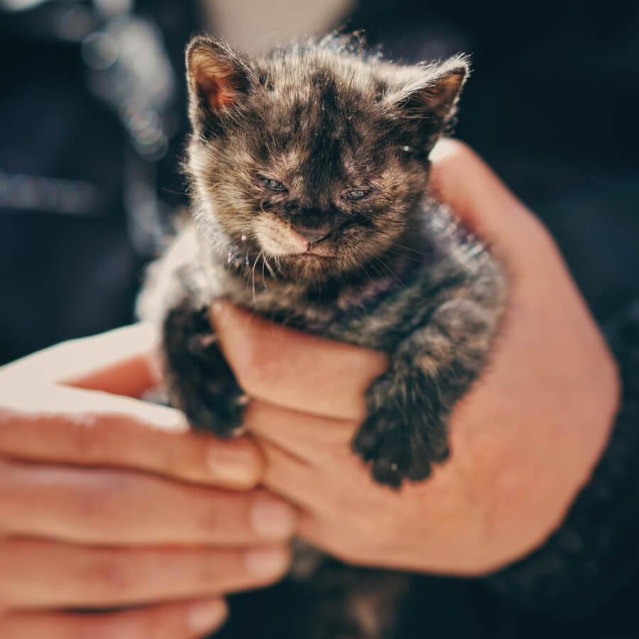 gato escondido conducto ventilacion