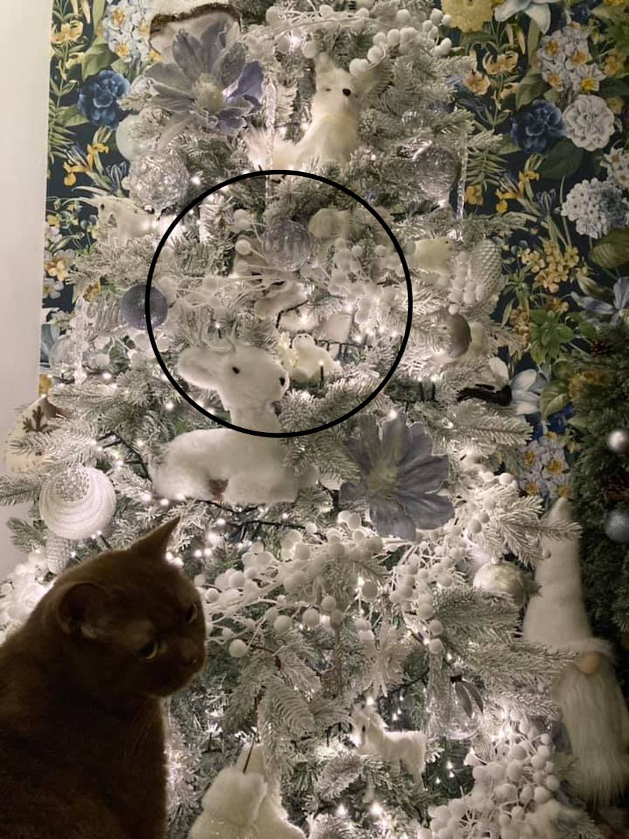 gato escondido arbol de navidad solucion