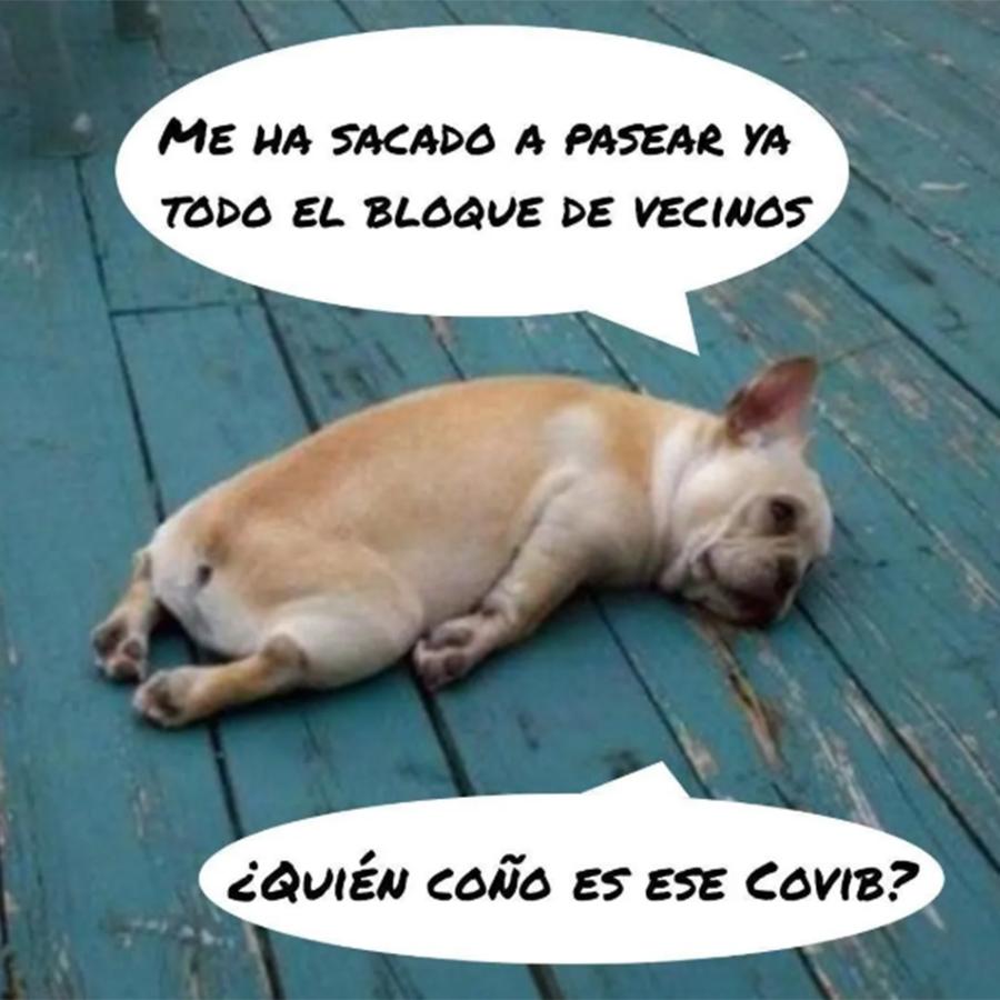 perro cansado meme