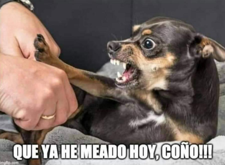 meme perro enfadado