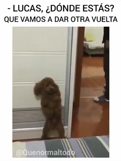 meme perro escondido
