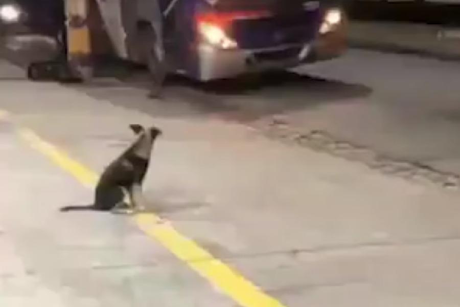 Perrito espera en la parada a su amigo chofer. Fuente: Facebook / Infobae