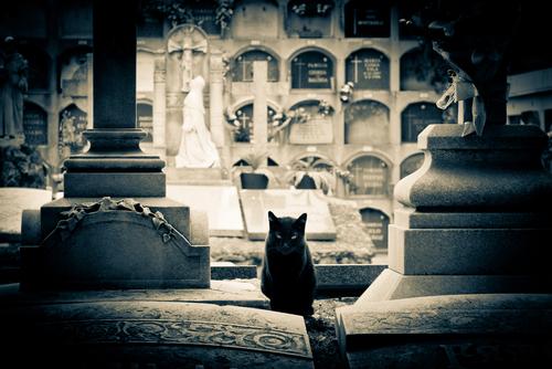 gato terror cementerio