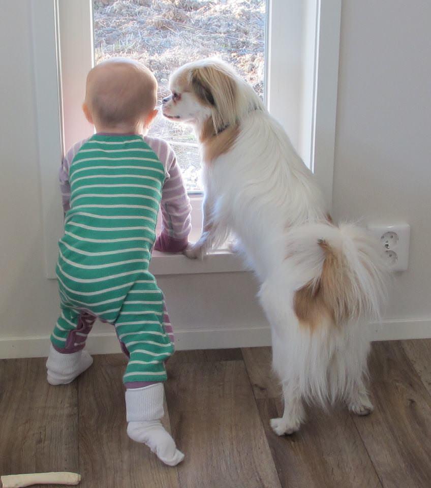 bebe y perro mirando por la ventana
