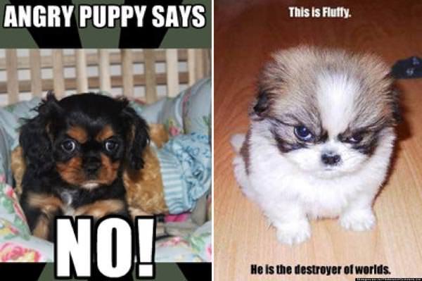 cachorro enojado