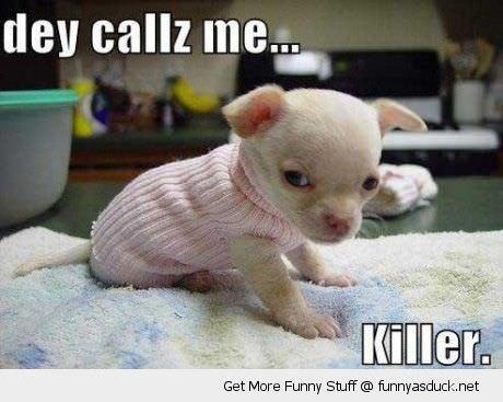 cachorro blanco jersey enojado