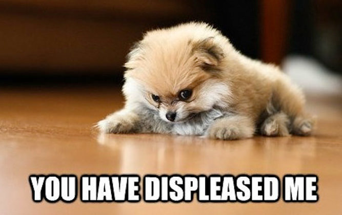 cachorro gruñon muy pequeño