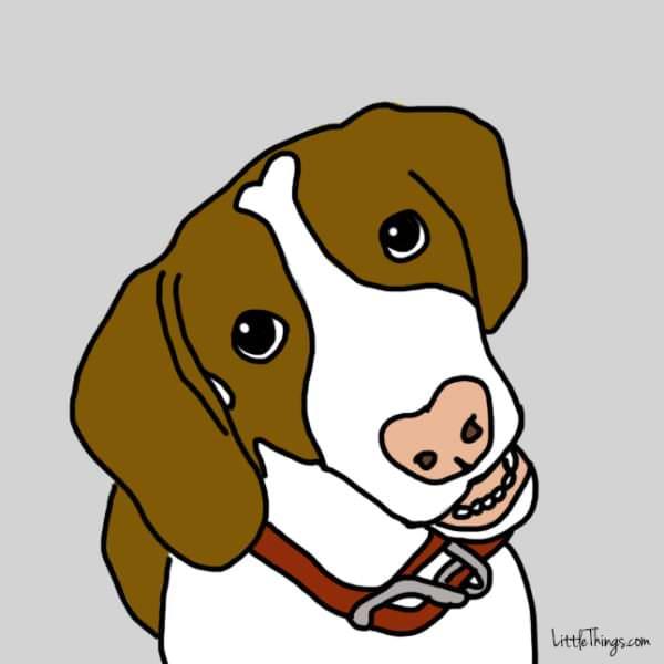 gestos perro te amo