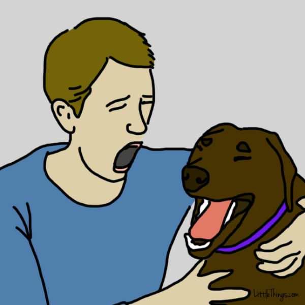 gestos perro te amo bostezo