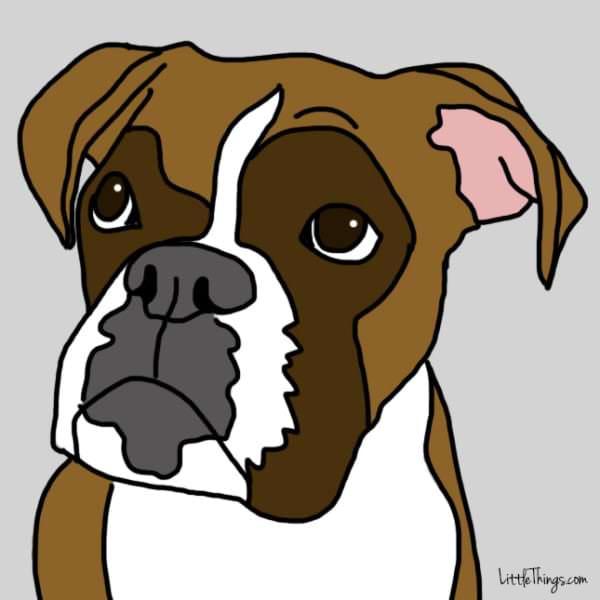 gestos amor perros miradas