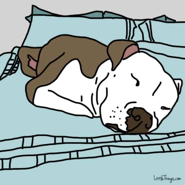 gestos de amor dormir con perro