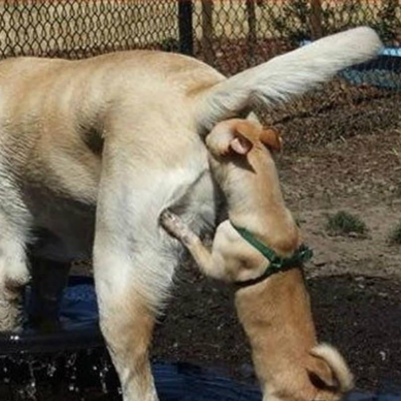 dia de la madre perros oliendo culos