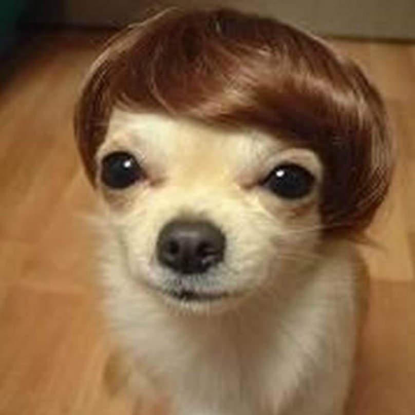 dia de la madre perro peinado