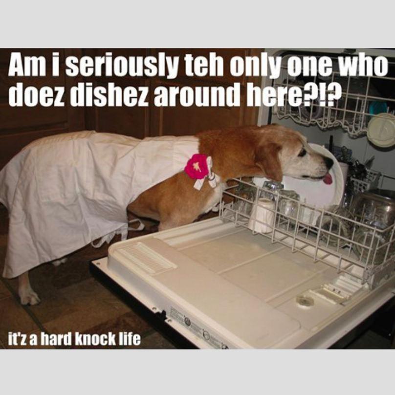 dia de la madre perro lavando los platos