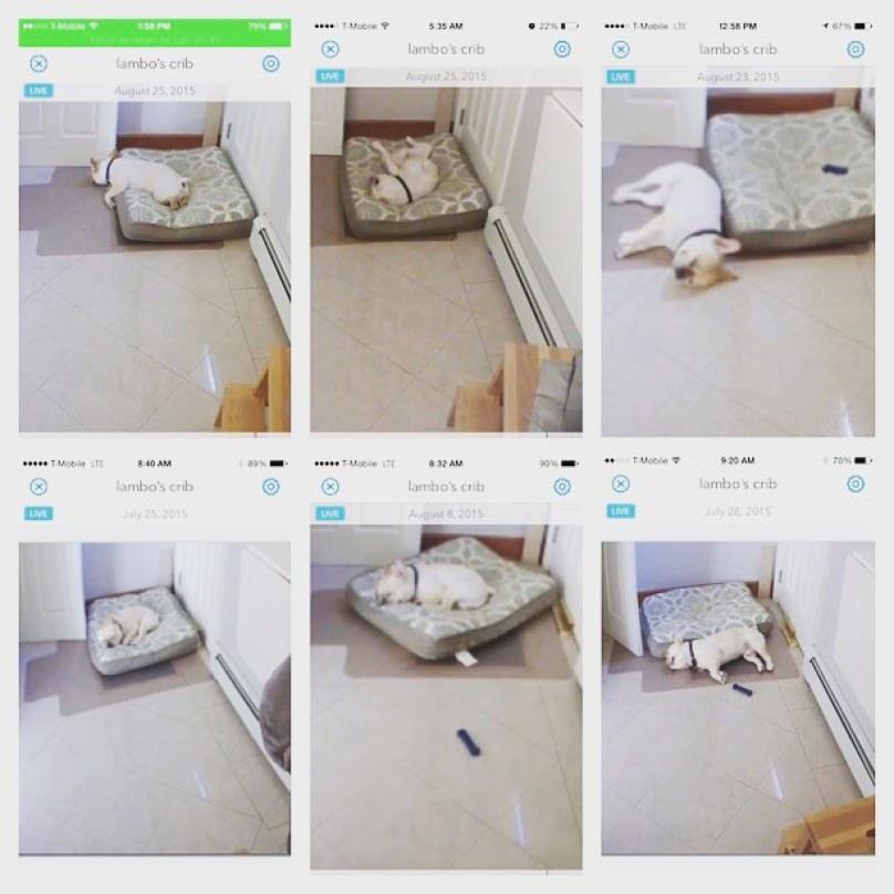 perro durmiendo en su cama solo