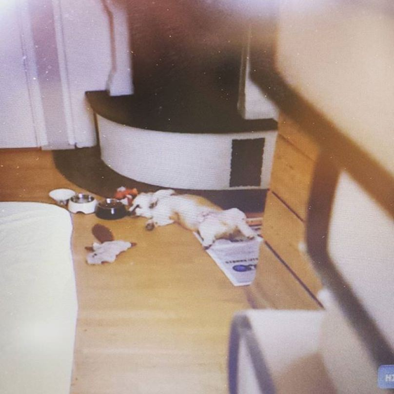 perro relajado en casa