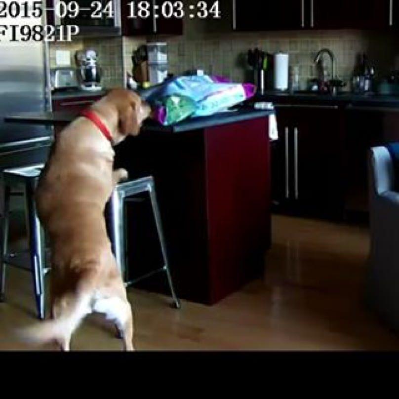 perro robando comida a humanos