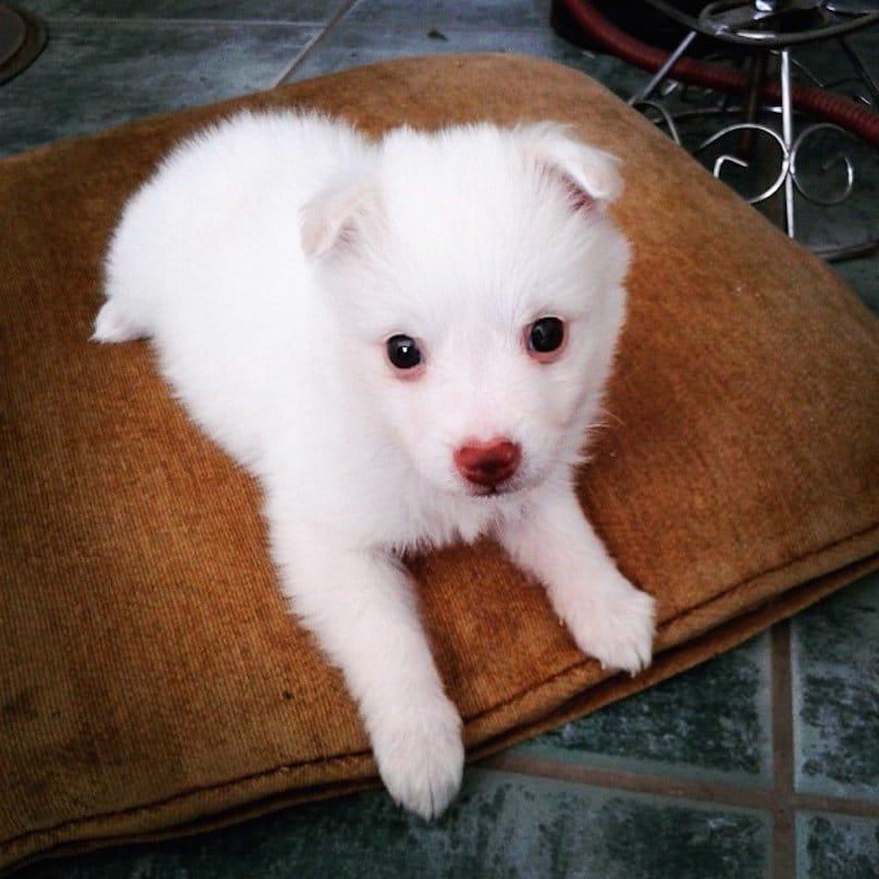 perro blanco corazon nariz