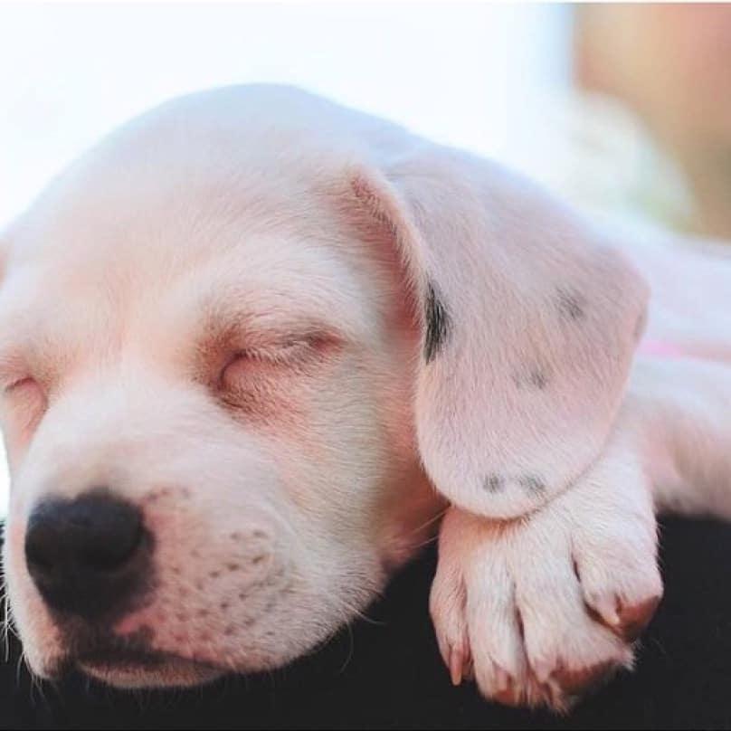 cachorro descansando