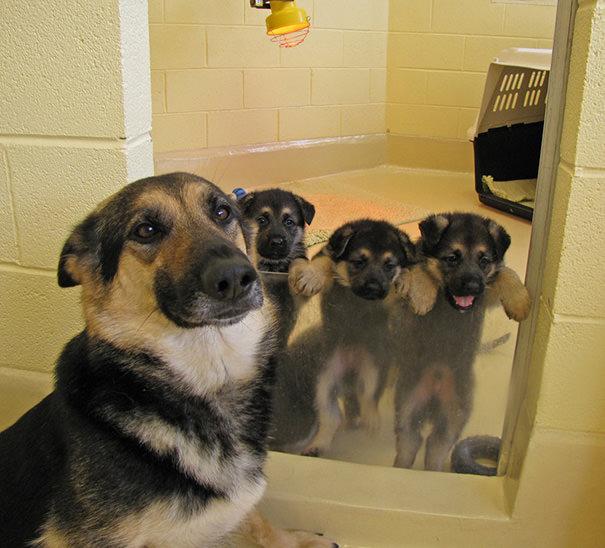 perros mestizos posando con mama