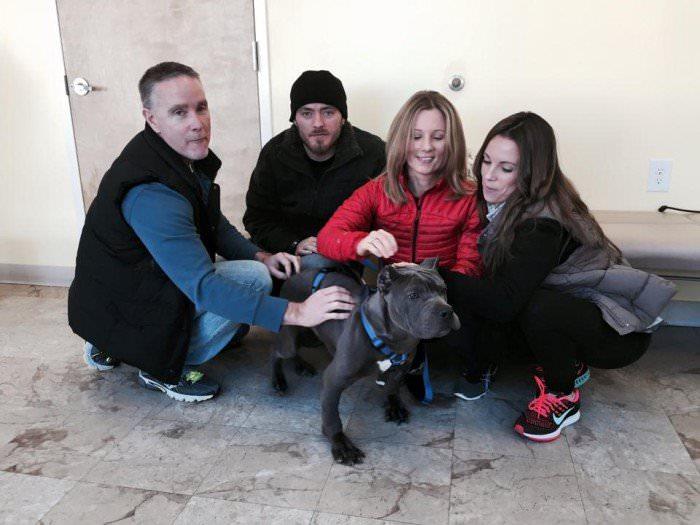 pitbull segunda oportunidad