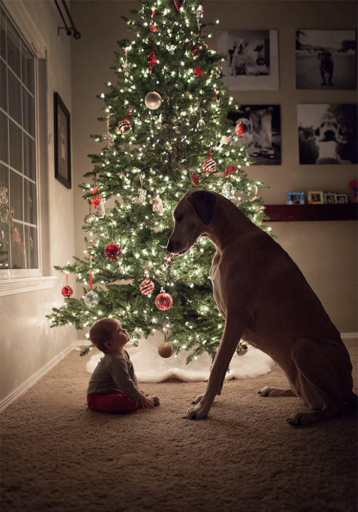 perro y niño en navidad