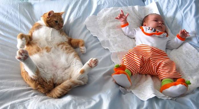 gato y bebe en la cama