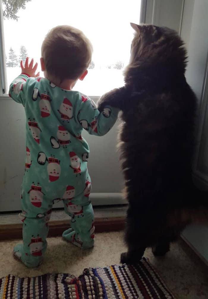 niño y gato de la mano