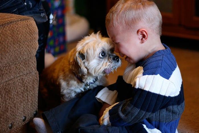 niño llorando y perro