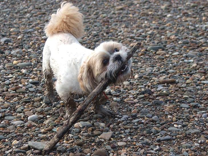 porque mi perro me trae palos