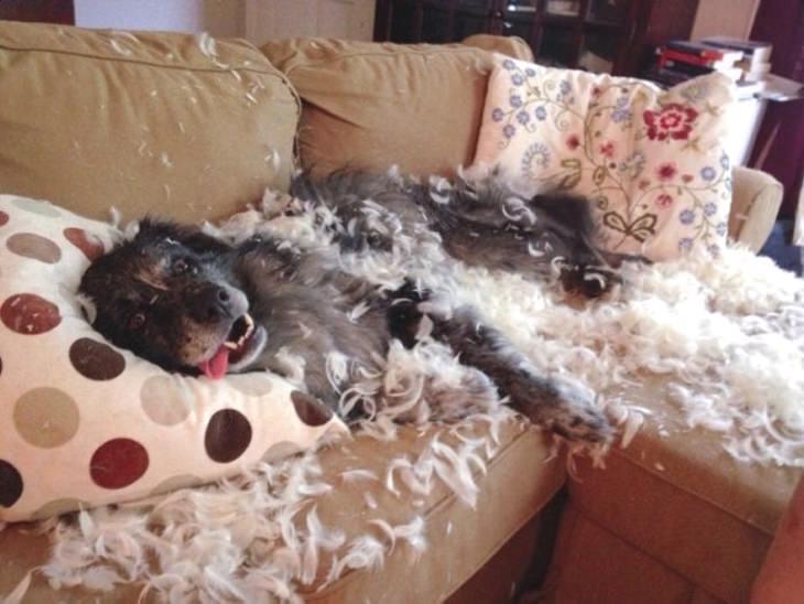 porque mi perro muerde el sofa