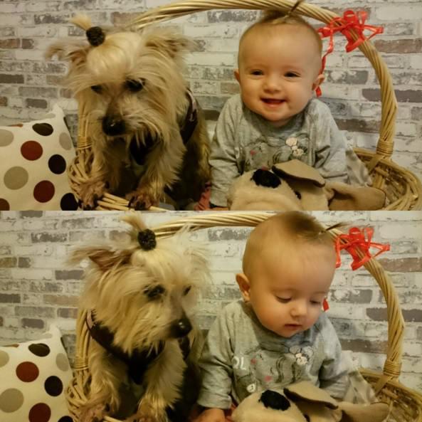 perro y bebe en cesta