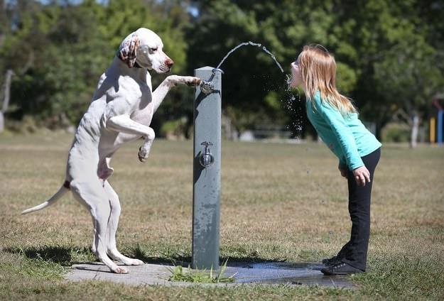perro y niña fuente