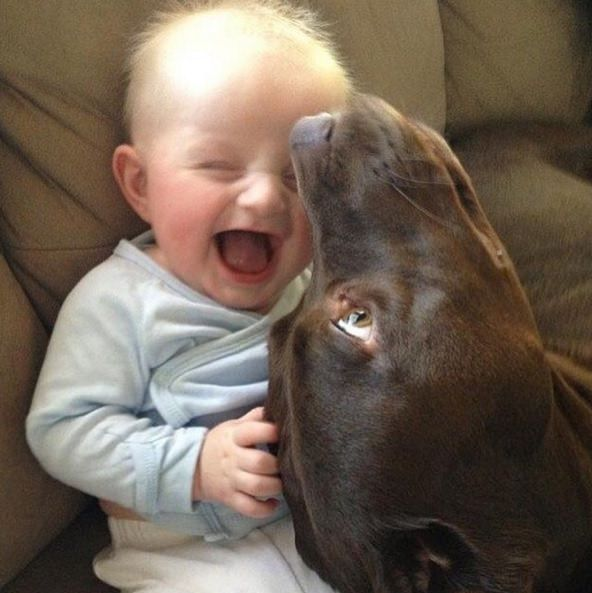 perro chupando a bebe