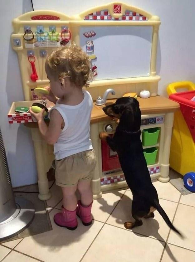 perro y niño jugando en cocina