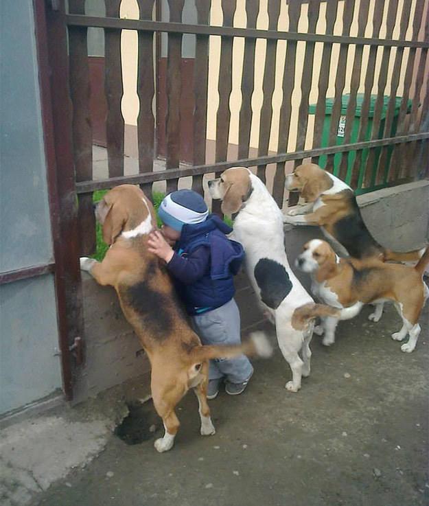 perros y niño asomados