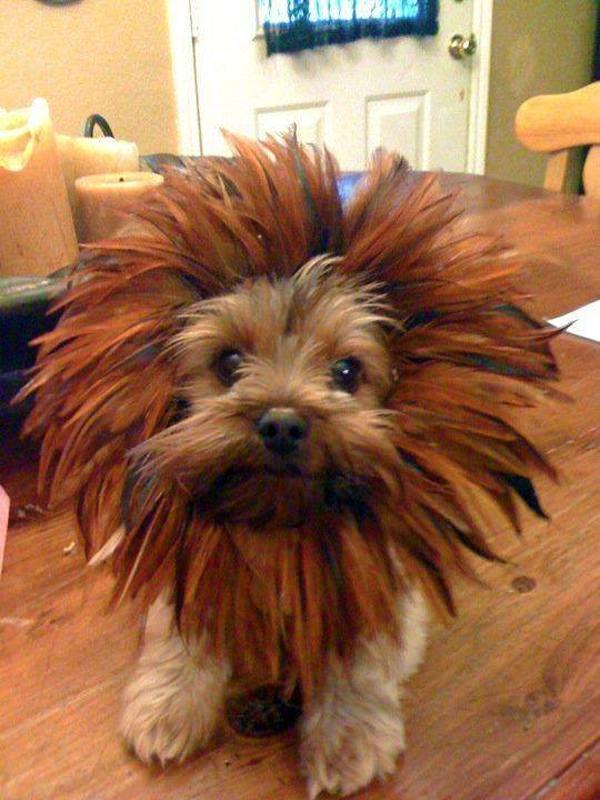 yorkshire leon