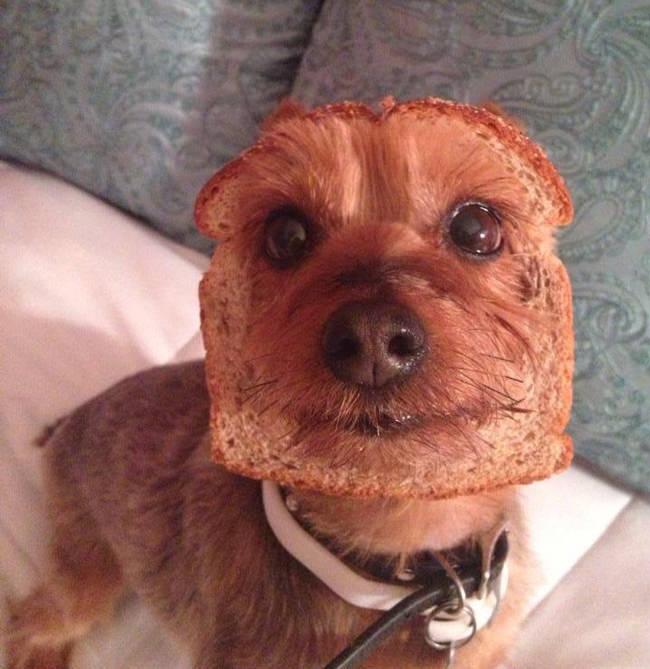 yorkshire tostada