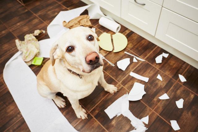 perro papel higienico