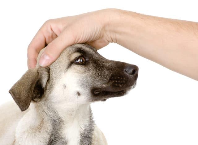 mano toca cabeza perro