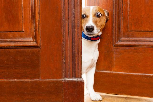 perro puerta miedo