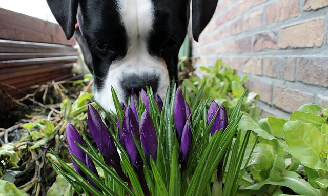 perro olores flores