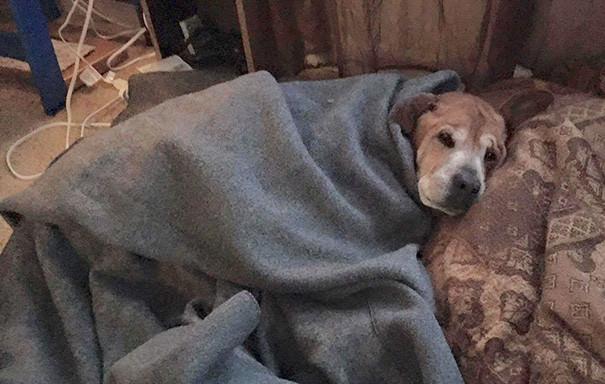 perro con tos de las perreras