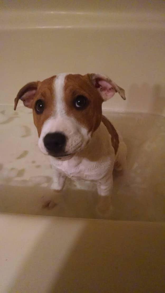 cachorro poniendo ojitos durante el bano