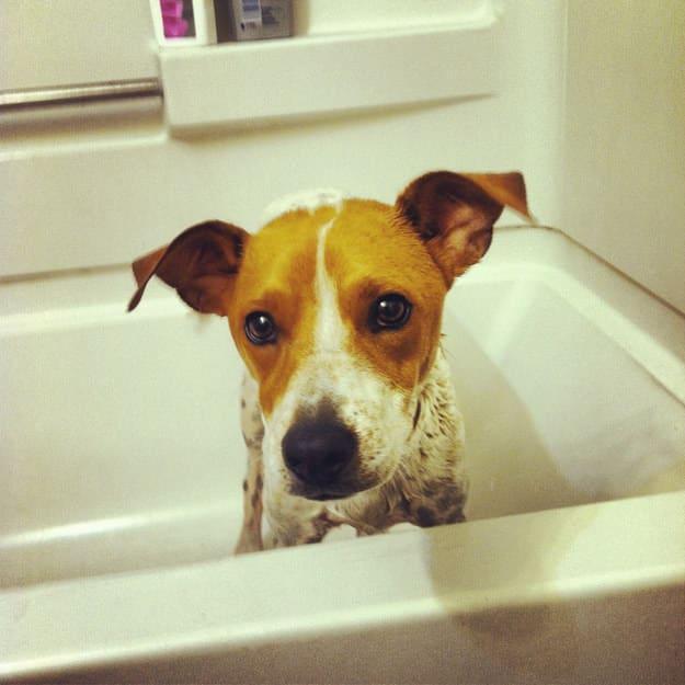 cachorro bañera