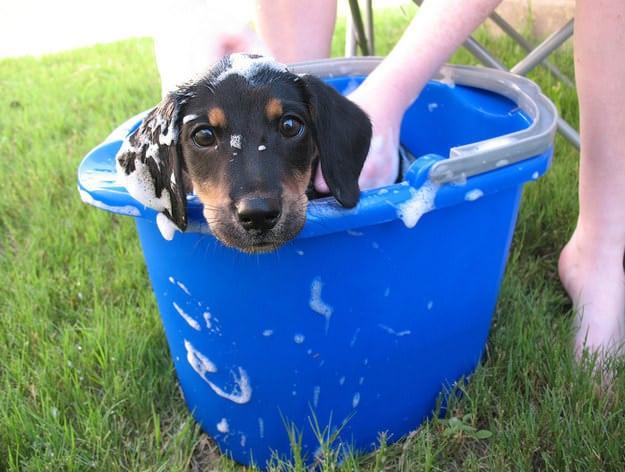 perrito dentro de un cubo lleno de agua