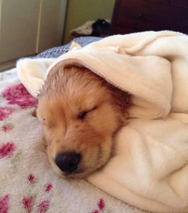 cachorro con albornoz sobre la cama